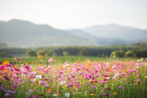 las propiedades de las flores